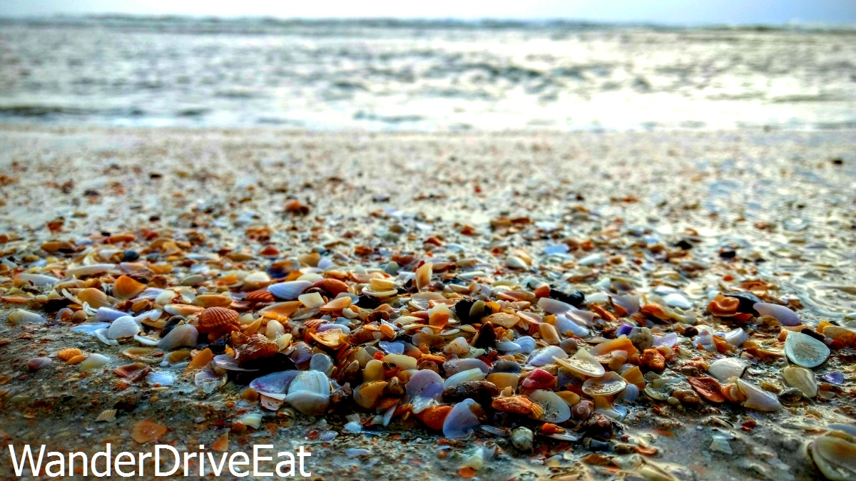 Beach-sea-shells-3