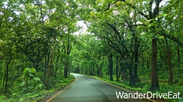 Pune-Chorla-forest