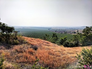 Fratelli Vineyards plantations tour